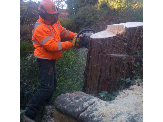 tree-stump-removal-5