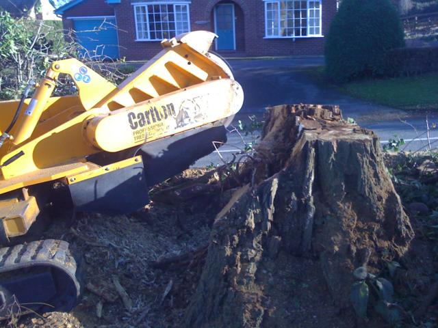 tree-stump-removal-c